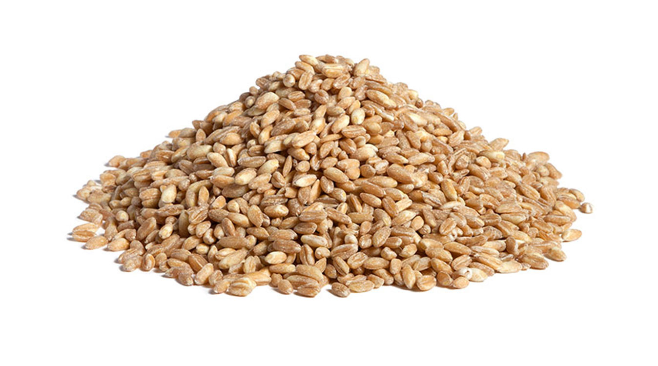 Precooked Cereals, Grains & Pulses Slider Header 2
